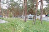 Аренда коттеджа посуточно в Хотяновке, Киевская область! - территория леса